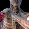 Terapia del dolore osteomuscolare tramite iniezione di anestetici locali nei punti trigger